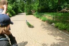 Výlet ministrantů do zoo v Brně