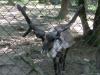vylet-do-zoo-032