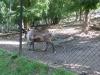 vylet-do-zoo-033