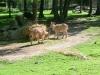 vylet-do-zoo-034