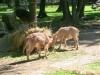 vylet-do-zoo-035
