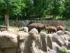 vylet-do-zoo-062