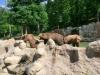 vylet-do-zoo-064