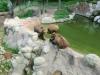 vylet-do-zoo-070