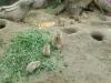 vylet-do-zoo-108