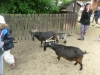 vylet-do-zoo-123