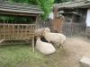 vylet-do-zoo-130