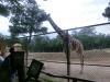 vylet-do-zoo-140