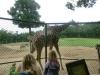 vylet-do-zoo-141