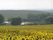 Dvorský rybník - pohled od obce