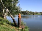 Dvorský rybník - s vodníkem